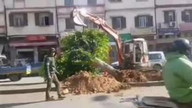محزن.. فيديو للحظة إزالة أشجار شارع الشجر بسباتة